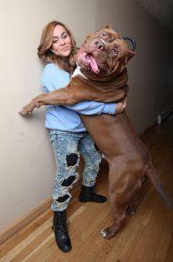 Това се казват големи кучета