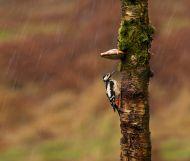 Животинки, които си имат чадърчета от природата