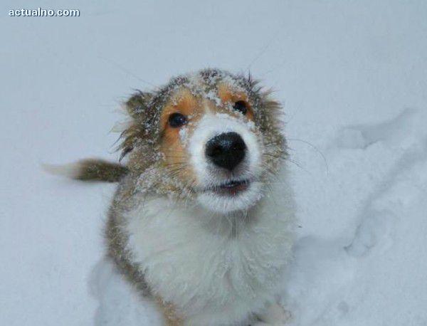 photo of Кучета диагностицират рак с 90% точност