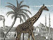 Много малко хора виждат втория жираф на тази снимка