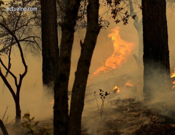 Овладяха големия горски пожар в Испания