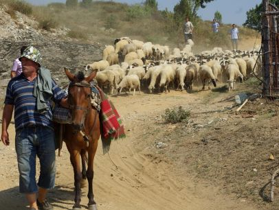 """""""Синият език"""" изкарва животновъдите на протест"""