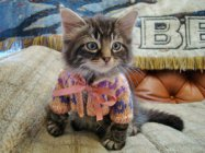 Малки и сладки животинки с пуловери