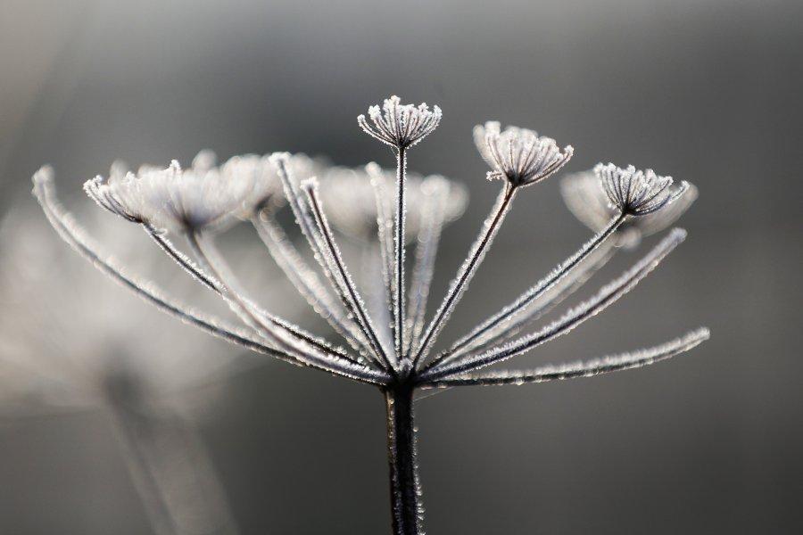 Красотата на зимата