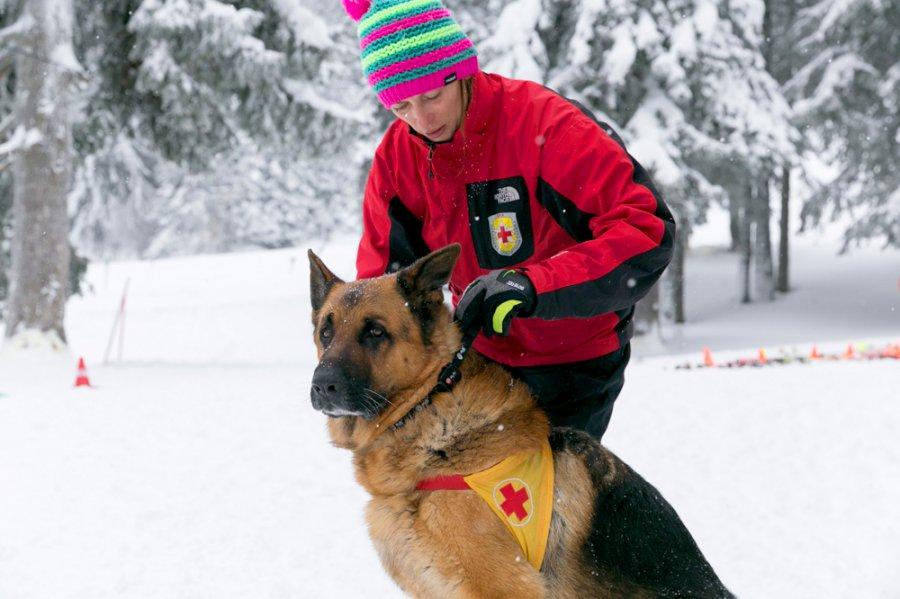 Кучетата-спасители на БЧК с нови каишки GPS