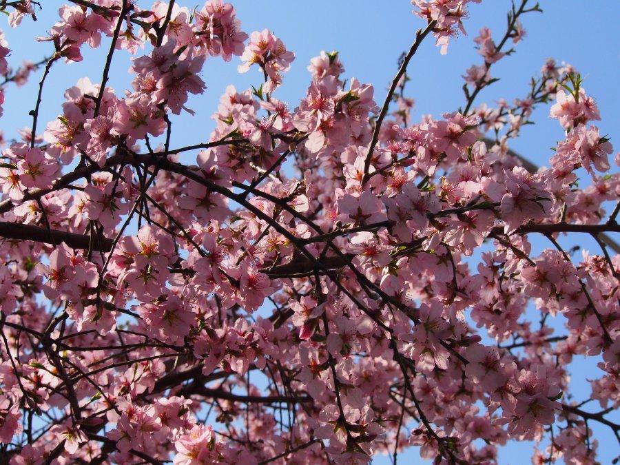 Варна посрещна пролетта