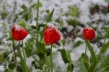 Снегът в края на април