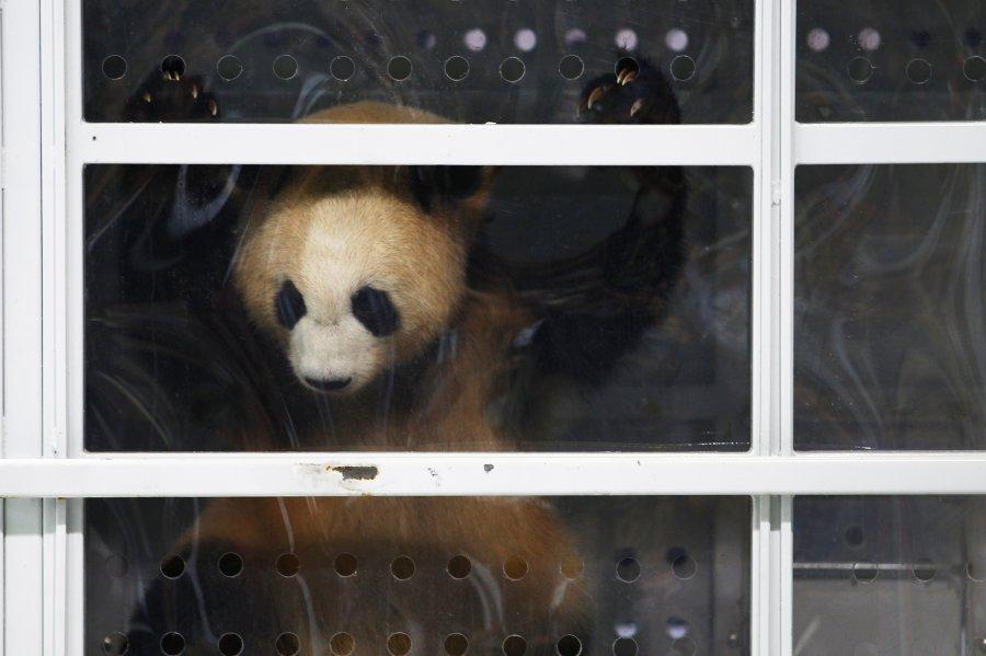Падните Мечта и Скъпа пристигнаха в Берлинския зоопарк