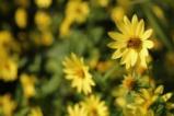Пчелите и цветята