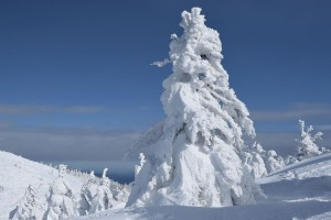 Снежни чудовища