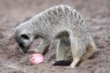И животните празнуват Великден