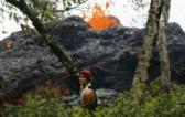Изригването на вулкана Килауеа отблизо