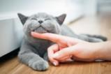Когато котките си почиват