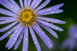 Цветята остават красиви и след буря