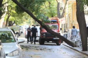 Дърво се наклони опасно в София