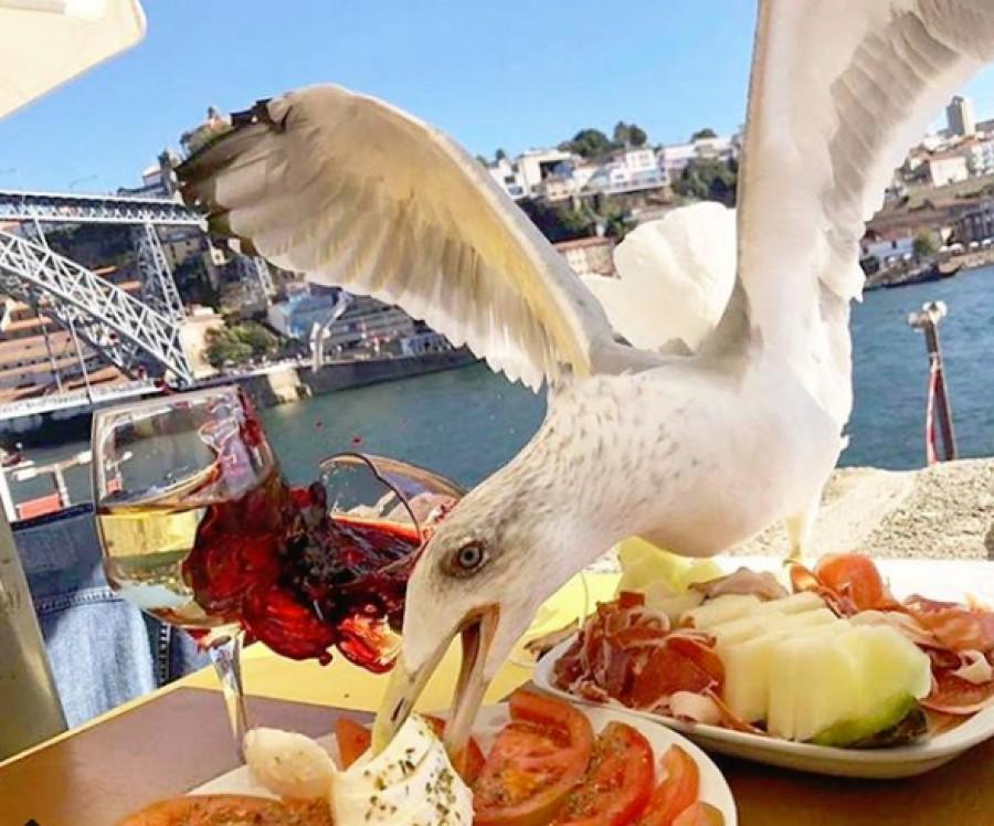 Нагла птица отмъкна обяда на Икер Касияс