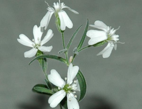 photo of Древни растения бяха отгледани от замразен 30 хил. години плод