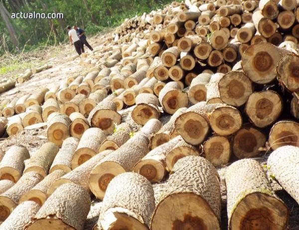 photo of 10 акта са издадени след обход на горите в област Добрич