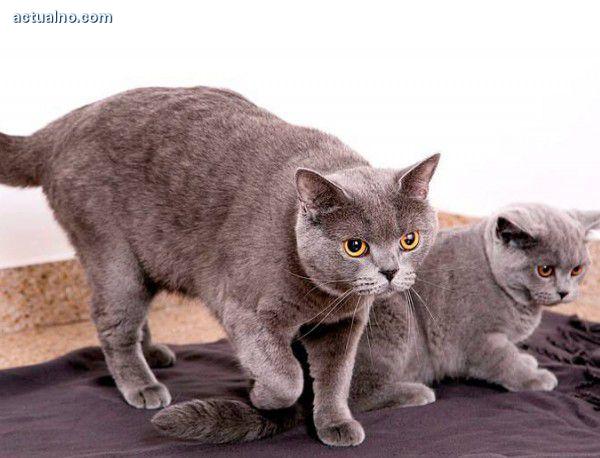 photo of Профилактика за здрави котки, спокойни стопани и по-малко разходи