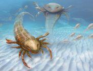 Гигантски скорпион тероризирал древните морета