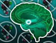 Невробиолози разкриха тайната на алкохолизма