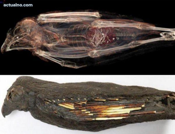 photo of Учени сканират най-старите мумии в света