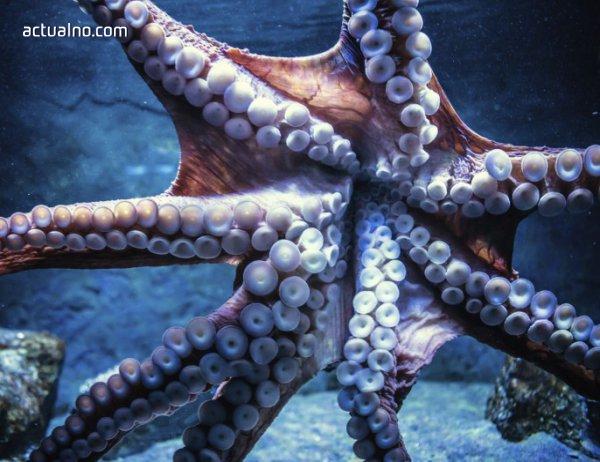 photo of Октоподите вдъхновиха учените за иновации в медицината