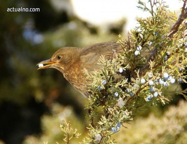 photo of SmartBirds сближава дивите птици и хората