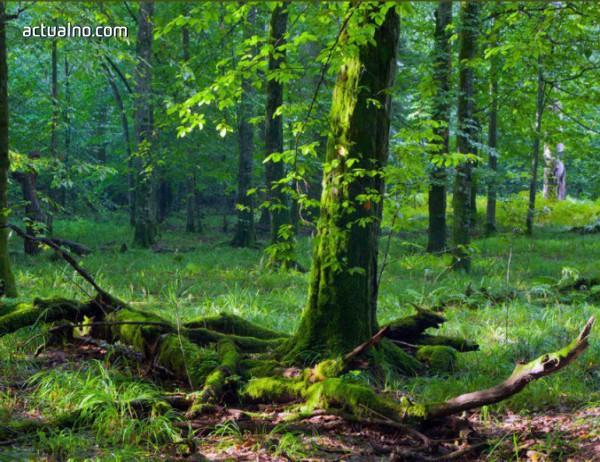 """photo of Вековните букови гори в """"Централен Балкан"""" стават част от обект на ЮНЕСКО"""