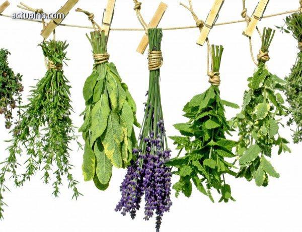 photo of 28 000 растения имат приложение в медицината