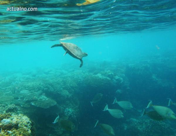 photo of Австралия прави нов опит да спаси Големия бариерен риф