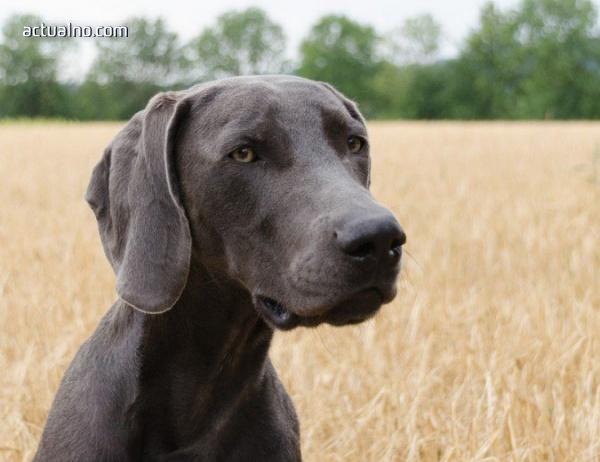 photo of ЦРУ уволни куче, защото нямало интерес към професията (СНИМКИ)