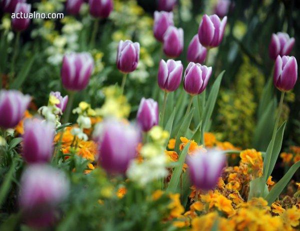 photo of Прогноза за времето - 19 май (петък)