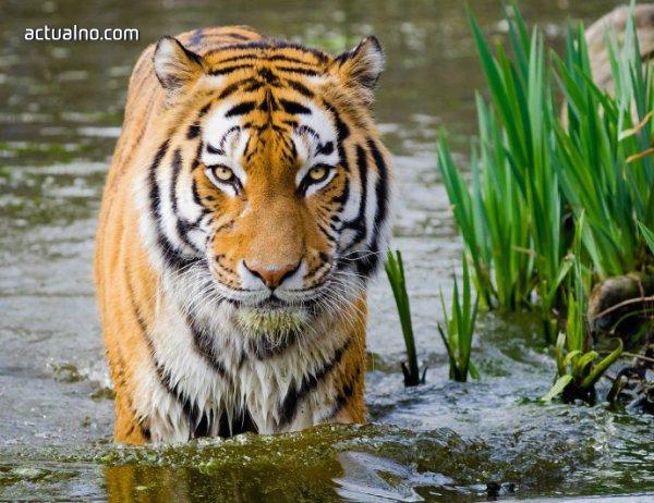 photo of Хората предизвикват шестото масово измиране на видовете на Земята