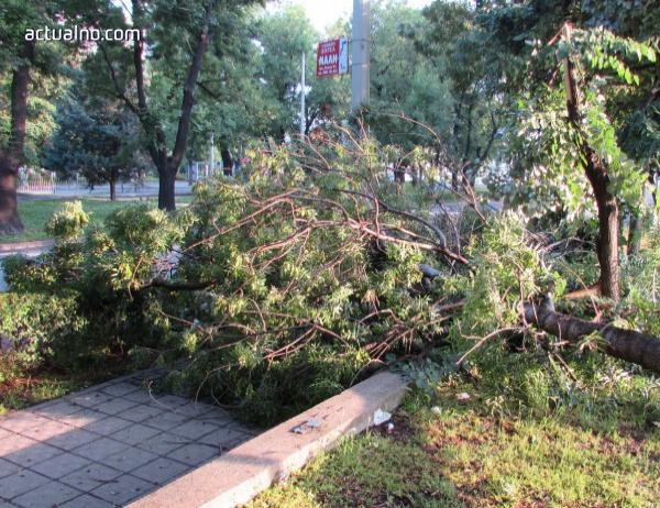 photo of Клон на дърво падна върху кола в Благоевград