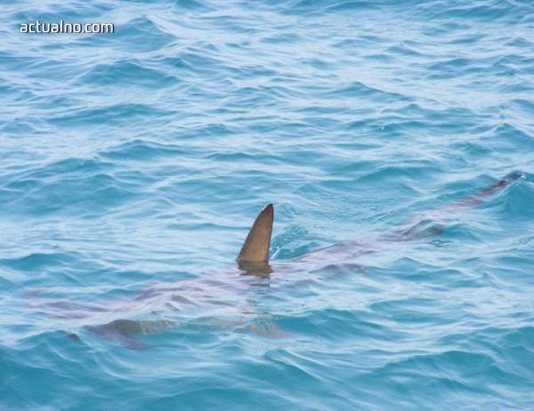 photo of Дете за малко да стане жертва на акули (ВИДЕО)