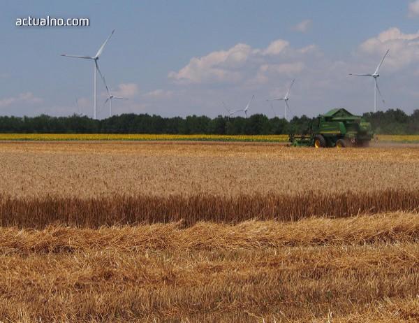 photo of Повече пшеница, ечемик и рапица са засети в Добричко