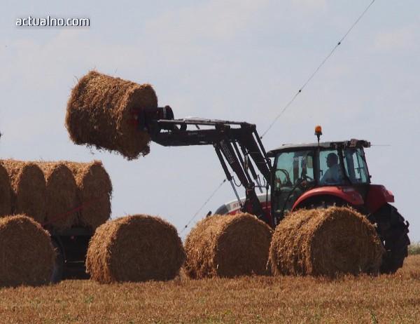 photo of Цената на пшеницата без промяна, олиото и захарта надолу