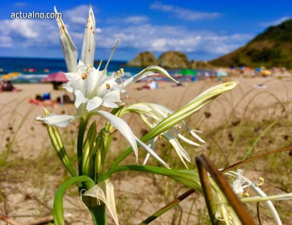 photo of Туризмът е на път да унищожи огромна част от крайбрежните екосистеми на Средиземноморието