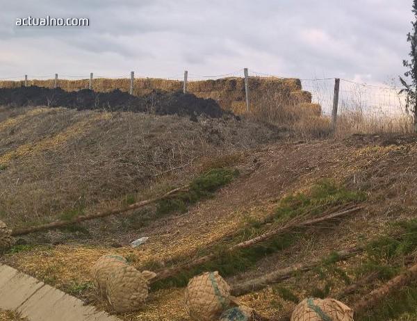 photo of Санкционираха строителна фирма за отсечен кипарис