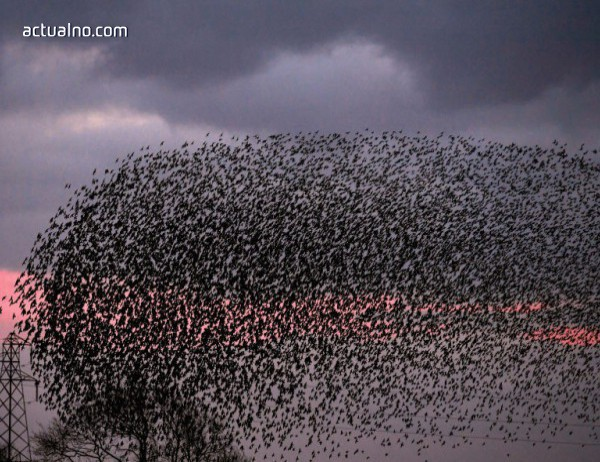 photo of Близо 1000 водолюбиви птици зимуват по поречията на Марица