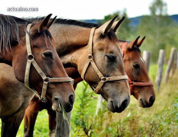 photo of Конна езда ще помага на ученици със СОП в Лясковец