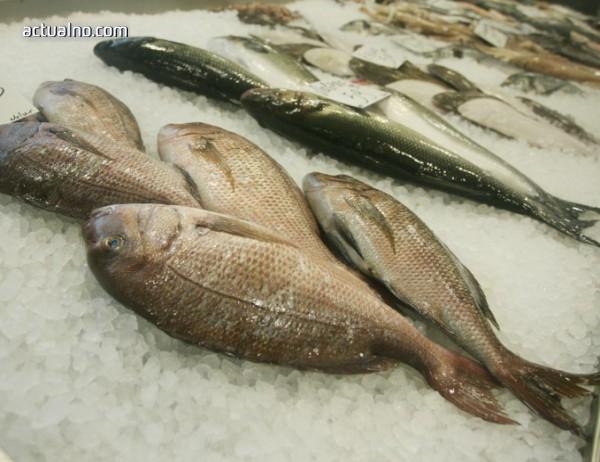 photo of Яжте веднъж седмично риба и ще намалите риска от множествена склероза