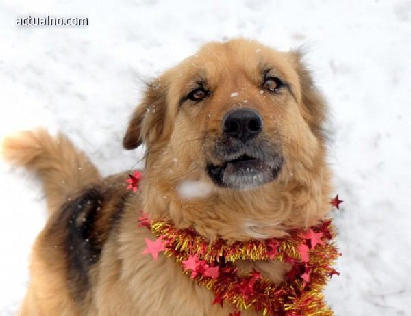 photo of Канадска фигуристка спаси корейско куче, отглеждано за ядене (СНИМКА)