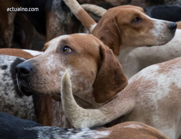 photo of Започва кастриране на бездомните кучета в Елин Пелин