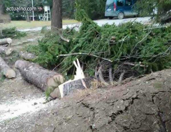 photo of Силният вятър в Смолянско остави щети в гората за 2-3 млн. лв.