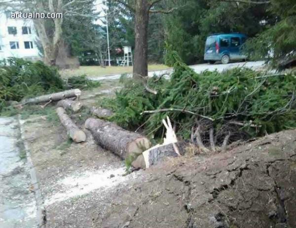 photo of Десетки сигнали за паднали дървета и опасни покриви в Пазарджик