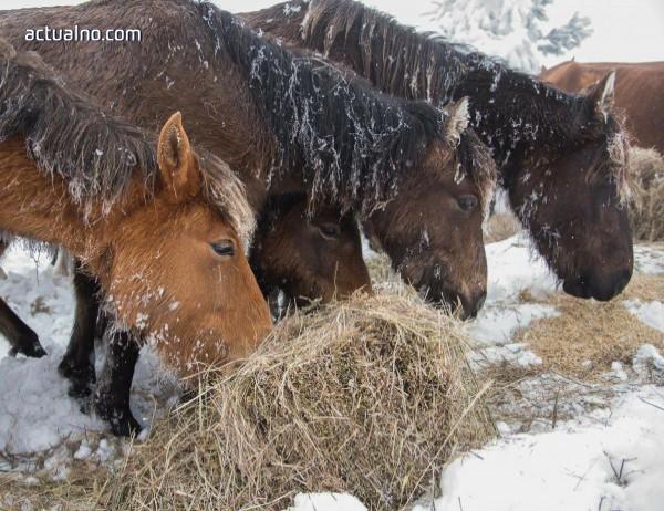 photo of Уморените коне ги убиват, нали