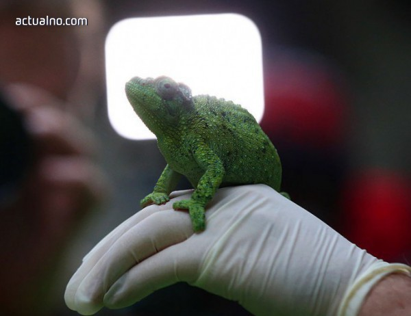 photo of Иновация - вече има гъвкав материал, който копира кожата на хамелеона