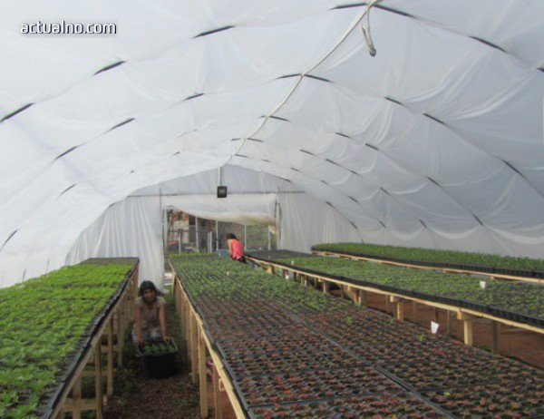 photo of Оранжерия за цветя си направи община Смолян